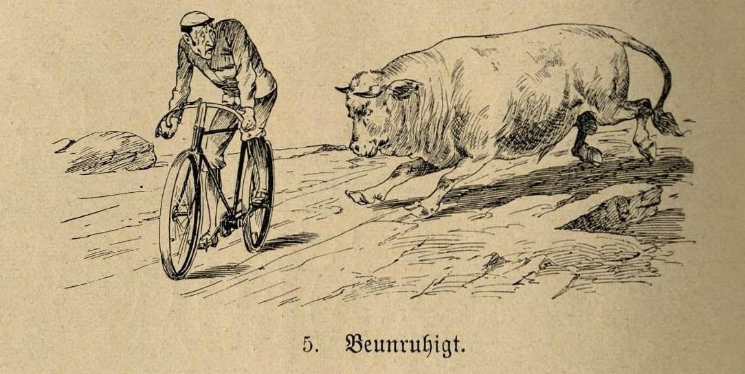 Radfahrer, beunruhigt durch einen ihn verfolgenden Bullen